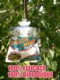 Acheter Piege a mouches biologique sans pesticide, non toxique